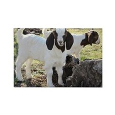 Twin goats Rectangle Magnet