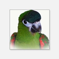 """Hahns Macaw Square Sticker 3"""" x 3"""""""