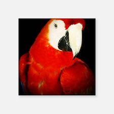 """Scarlet Macaw Square Sticker 3"""" x 3"""""""