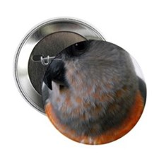 "Red Bellied Parrot 2.25"" Button"
