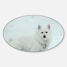 American Eskimo Dog Snow Day Sticker (Oval)