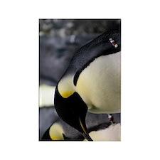 Emperor Penguins 5 Rectangle Magnet