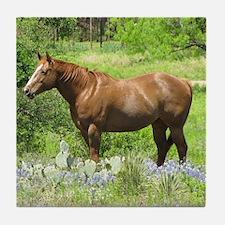 Horse in Bluebonnets Tile Coaster