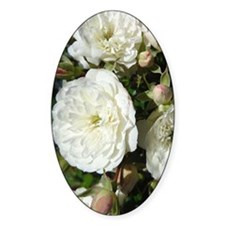 Yummy White Roses Decal