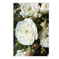 Yummy White Roses Postcards (Package of 8)