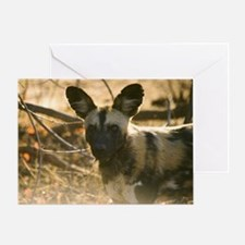 Wild Dog Watching Greeting Card