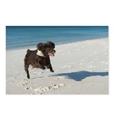 Scully Runs Inlet Beach Postcards (Package of 8)