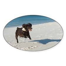 Scully Runs Inlet Beach Decal