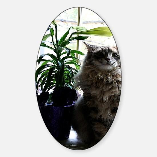maine coon cat keychain Sticker (Oval)