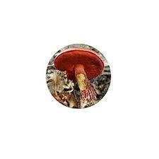 Boletus-frostii-2 Mini Button