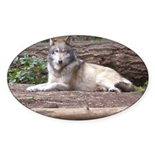 resting wolf1 Decal