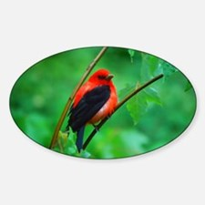 Scarlet Tanager Sticker (Oval)