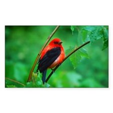 Scarlet Tanager Decal