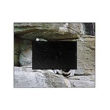Lemurs Picture Frame