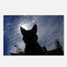 Stealthy Cattle Dog Postcards (Package of 8)