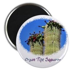 organ pipe saguaro Magnet