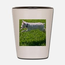 1.IMG_6844 Shot Glass