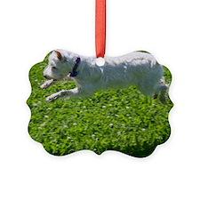 1.IMG_6844 Ornament