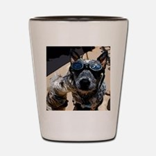 Stardom in a Cattle Dogs world Shot Glass