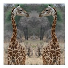 "thonggiraffe Square Car Magnet 3"" x 3"""