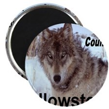 wolf_country_YNP Magnet