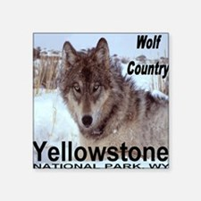 "wolf_country_YNP Square Sticker 3"" x 3"""