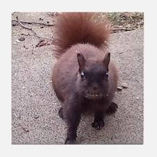 Foraging Squirrel Tile Coaster