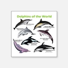 """Dolphins of the World Square Sticker 3"""" x 3"""""""