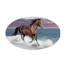 Dreamer_on_beach Oval Car Magnet
