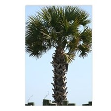 Hilton Head Palm Postcards (Package of 8)
