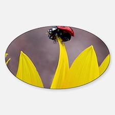 Ladybug on Tip Keychain Decal