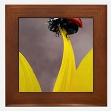 Ladybug on Tip Keychain 2 Framed Tile