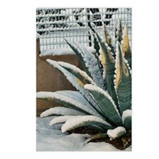 agave plant snow Postcards (Package of 8)
