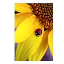Lady on Petal Oval Keycha Postcards (Package of 8)