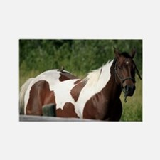 Horse with Bird Rectangle Magnet