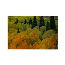 Aspen grove Rectangle Magnet