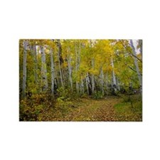 Mountian Road in Aspens, Rectangle Magnet