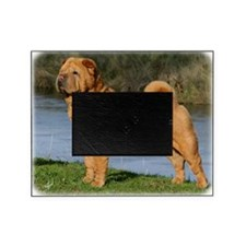 Shar Pei 9Y202D-026 Picture Frame