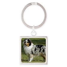 Shetland Sheepdog 9J089D-04 Square Keychain