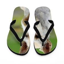 Scottish Terrier AA063D-101 Flip Flops