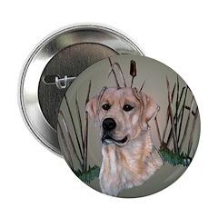 Labrador Retriever 2.25