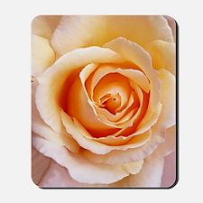 AFP 21a Creamy orange rose Mousepad