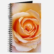 AFP 21a Creamy orange rose Journal