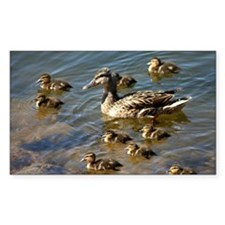 Big ducky family Decal