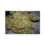 Cannabis Single