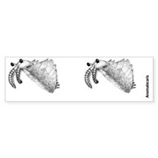 Anomalocaris Bumper Sticker