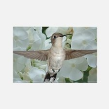 Hummer on Phlox Rectangle Magnet