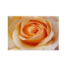 AFP 21b Creamy orange rose Rectangle Magnet