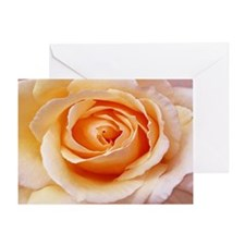 AFP 21b Creamy orange rose Greeting Card