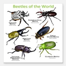 """Beetles of the World Square Car Magnet 3"""" x 3"""""""